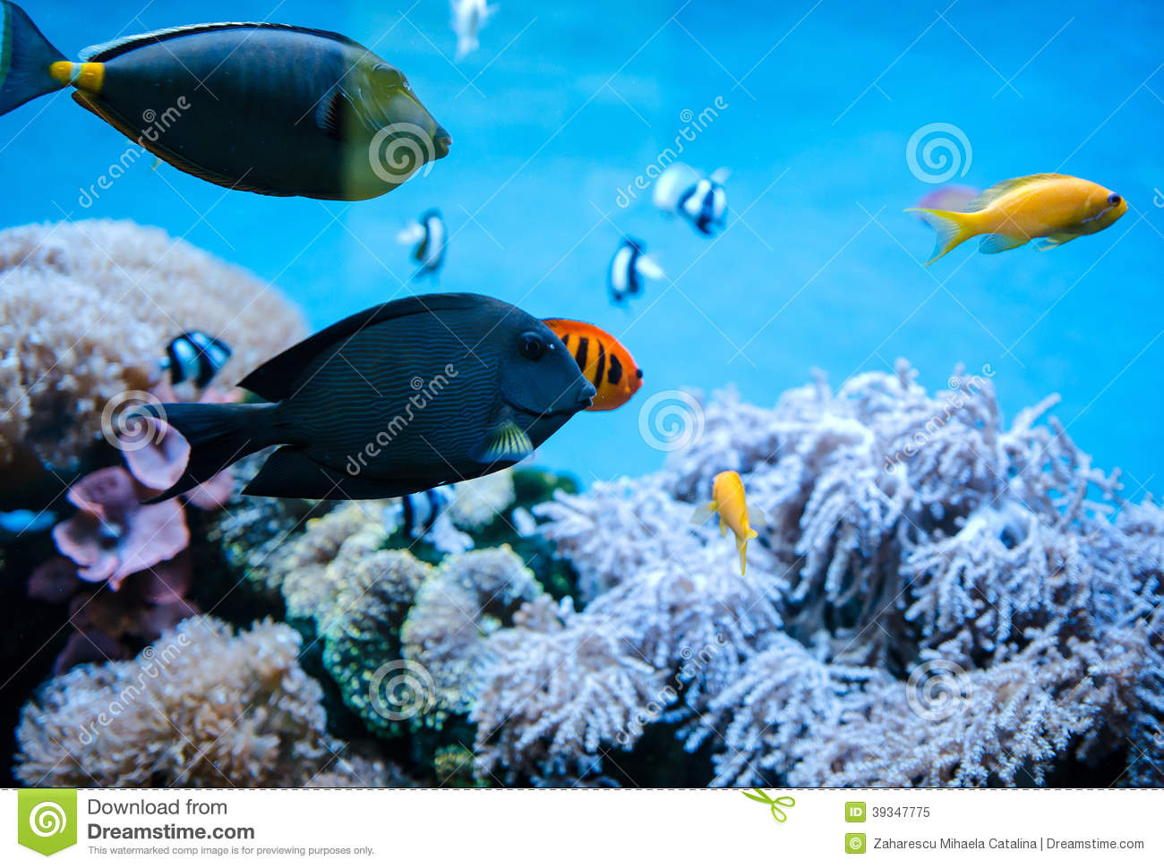 Tropical fish stock photo image 39347775 for Dream of fish swimming