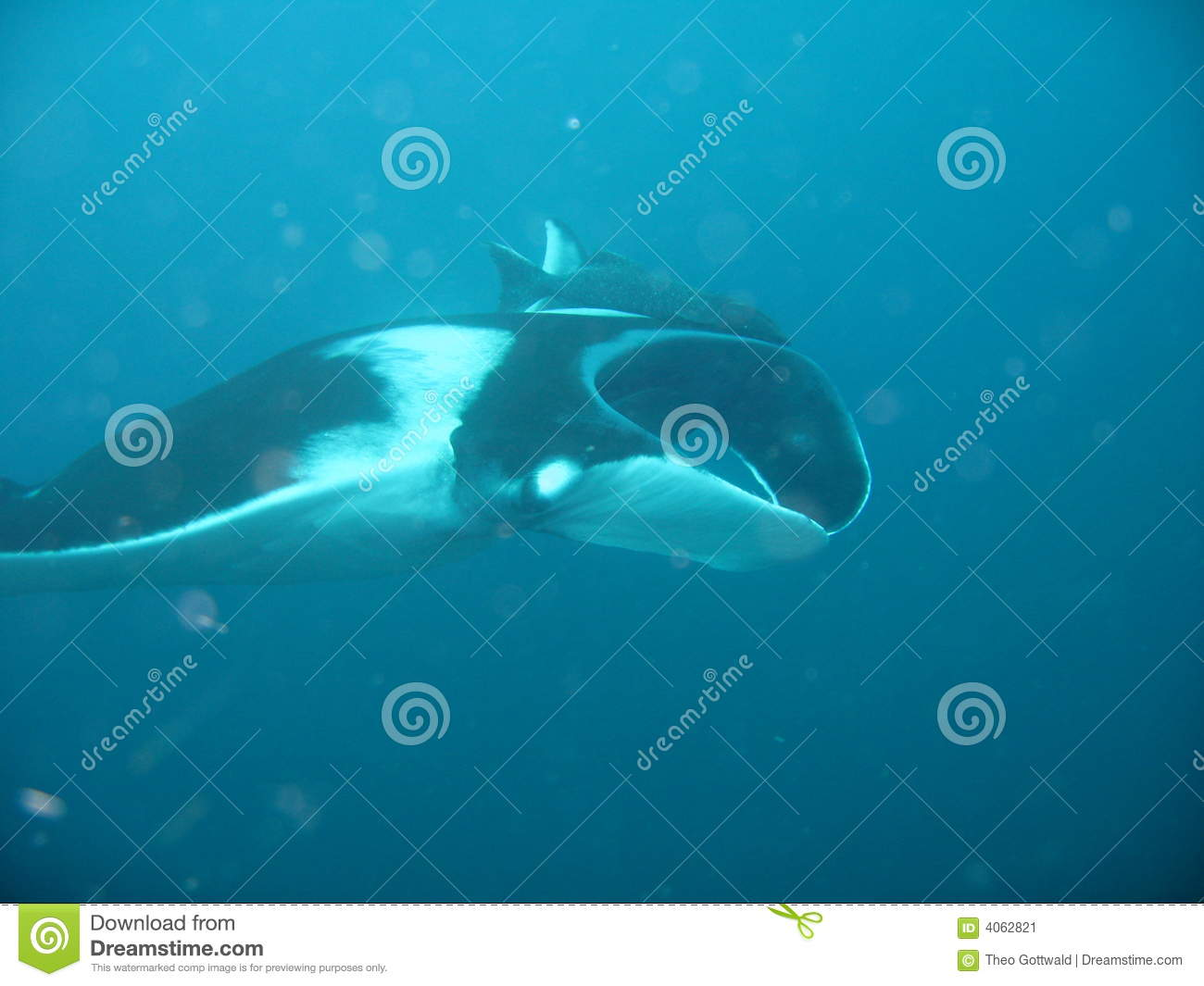 Tropical fish swimming in sea stock image image 4062821 for Dream of fish swimming