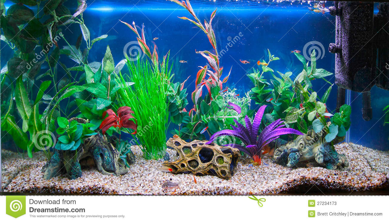 Tropical Fish Tank Aquarium Stock Photos - Image: 27234173