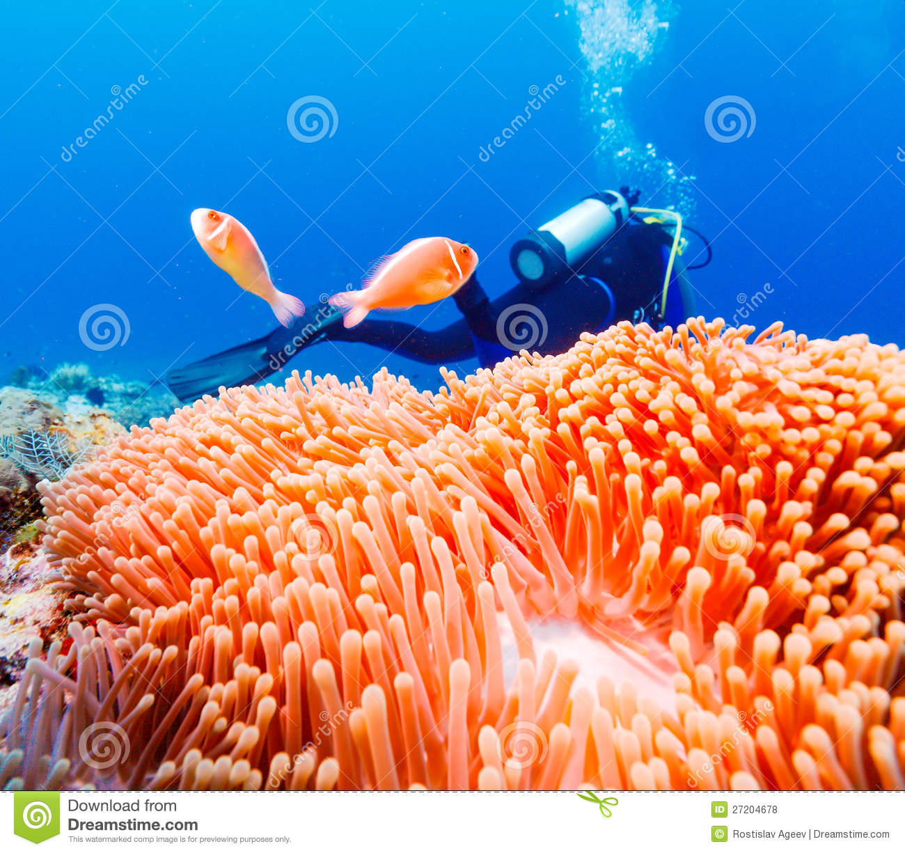 Tropical Fishes Near Colorful Coral Reef Stock Photo ...