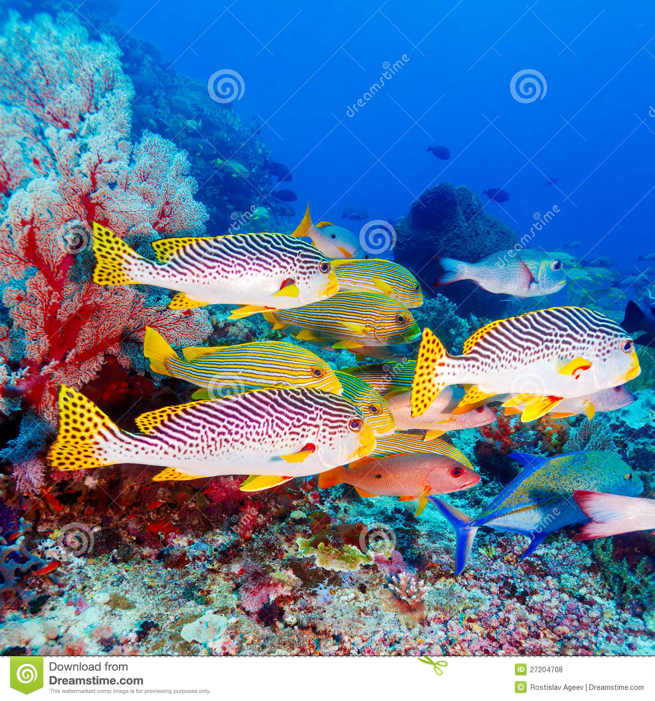 Tropical Fishes Near Colorful Coral Reef Royalty-Free ...