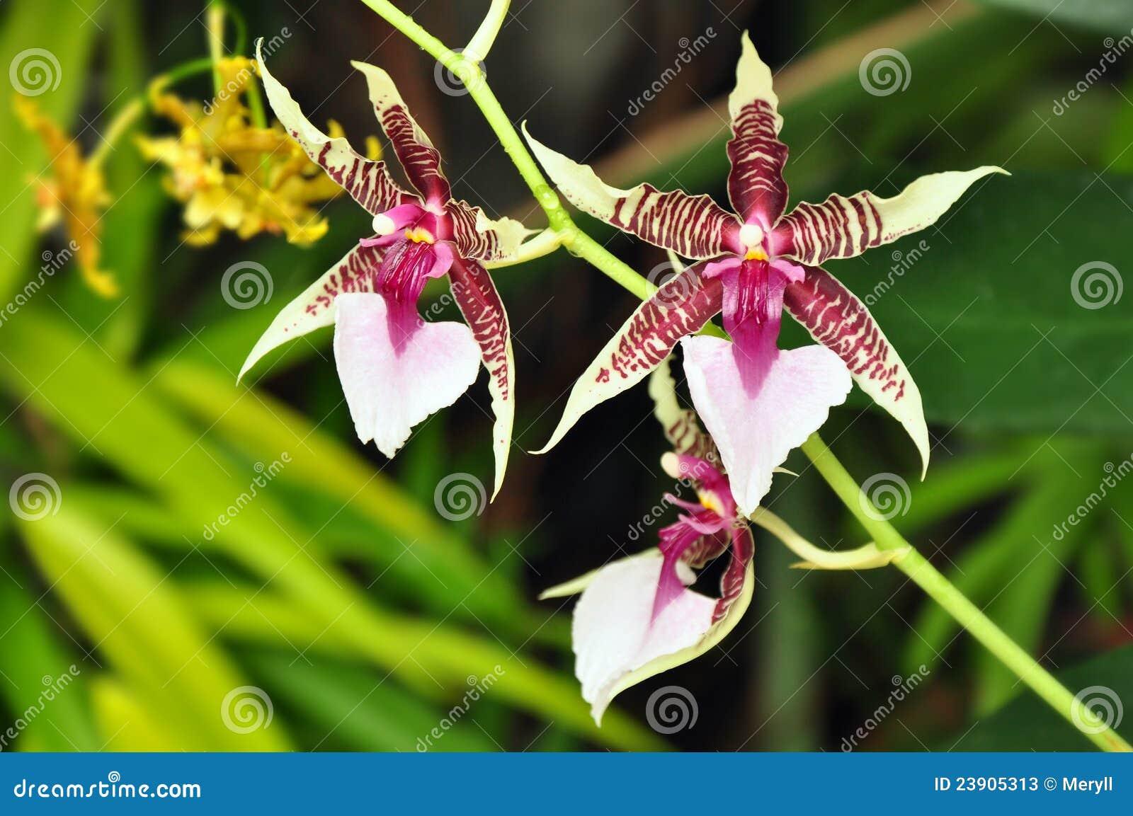 tropical flower exotic stock photos image 23905313. Black Bedroom Furniture Sets. Home Design Ideas