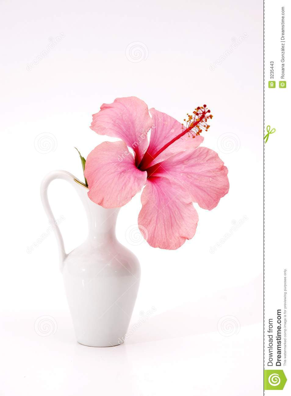 Stock Photos Tropical Flower Vase Image3235443 on living room themes