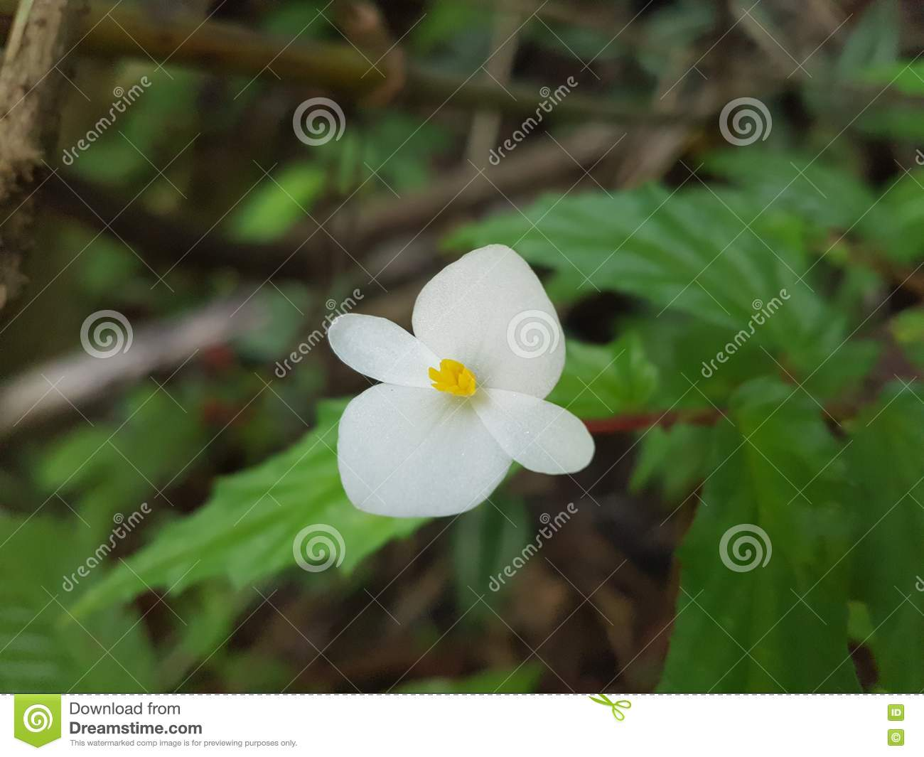 Tropical Flower Stock Photo Image Of White Center Tropical 81930950
