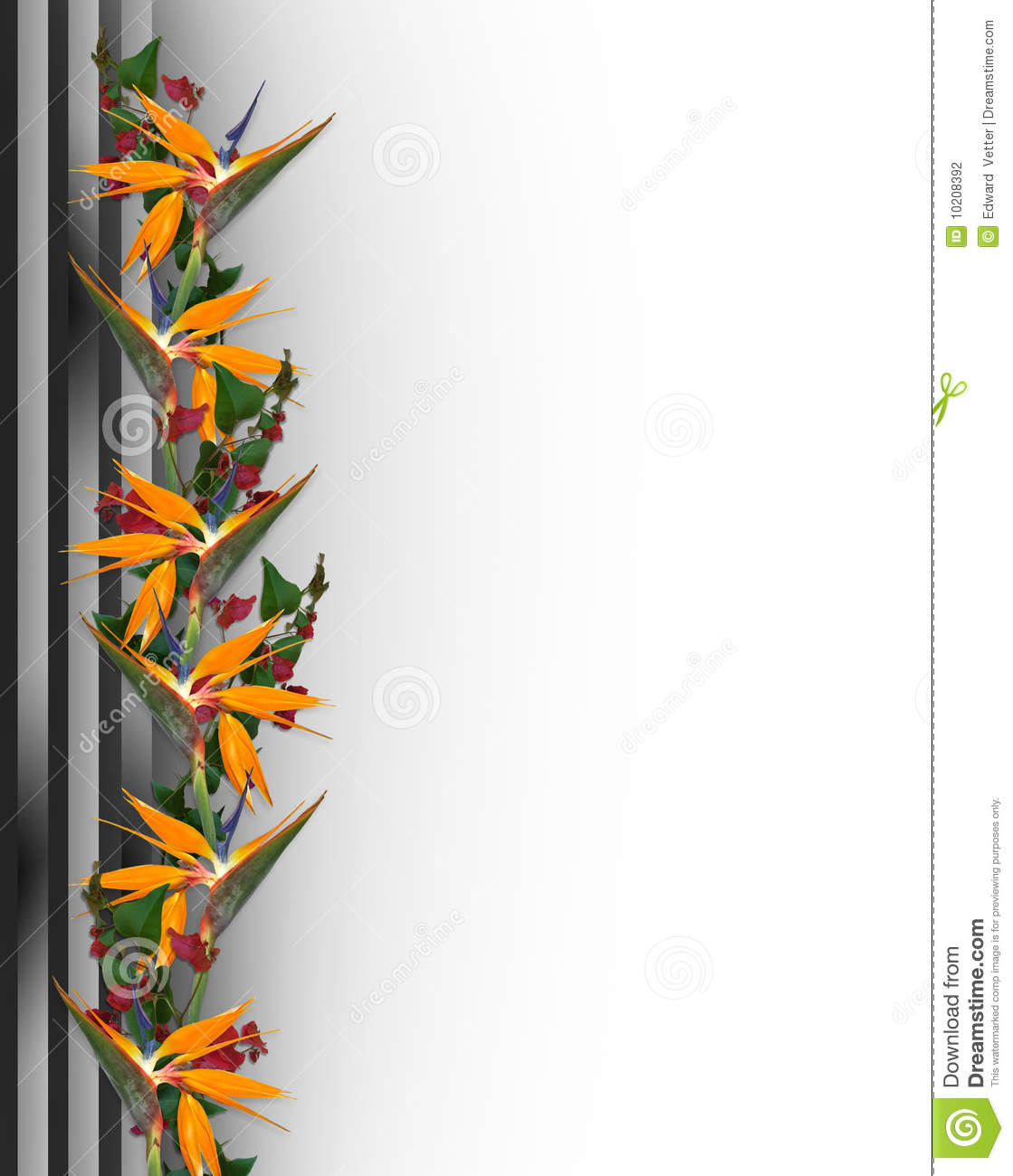 tropical flowers border bird of paradise stock photography. Black Bedroom Furniture Sets. Home Design Ideas