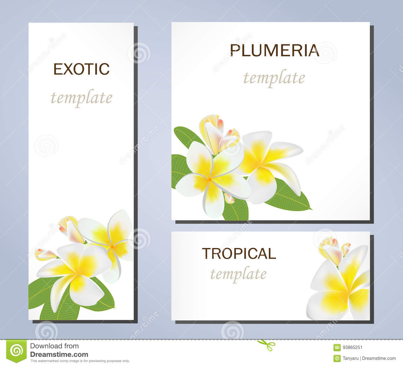 tropical flowers of plumeria on templates for business cards and