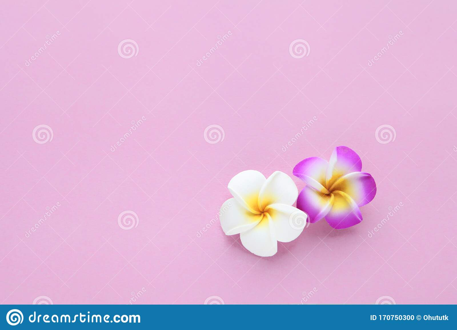 1 598 Plain Pink Backdrop Photos Free Royalty Free Stock Photos From Dreamstime