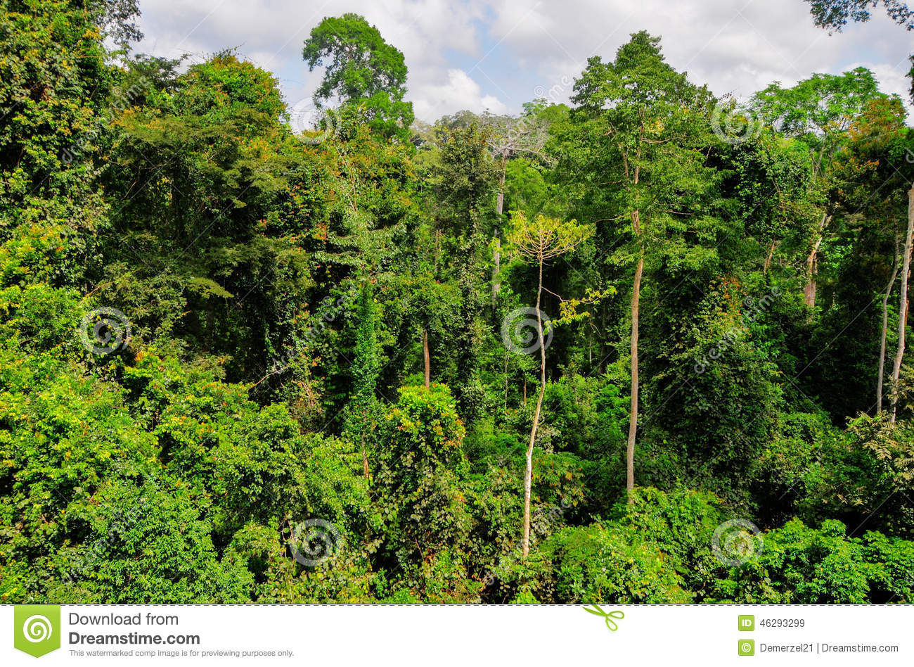 Formation Professionnelle Job Toronto also Photo 3751 Luoping Scenery Luoping China additionally Stock Photo Tropical Forest Kakum National Park Ghana Square Km Located Central Region Image46293299 as well 80141 further Mt trip 689. on ghana travel