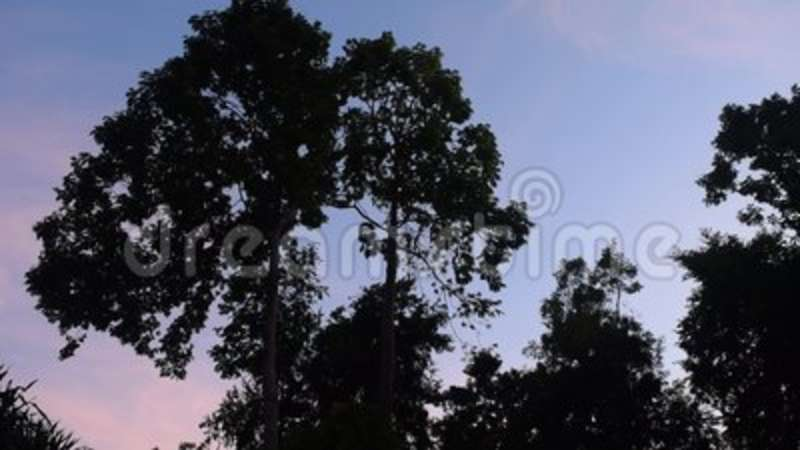 Tropical forest and sun light in the morning. Forest and sun light in the morning stock video footage