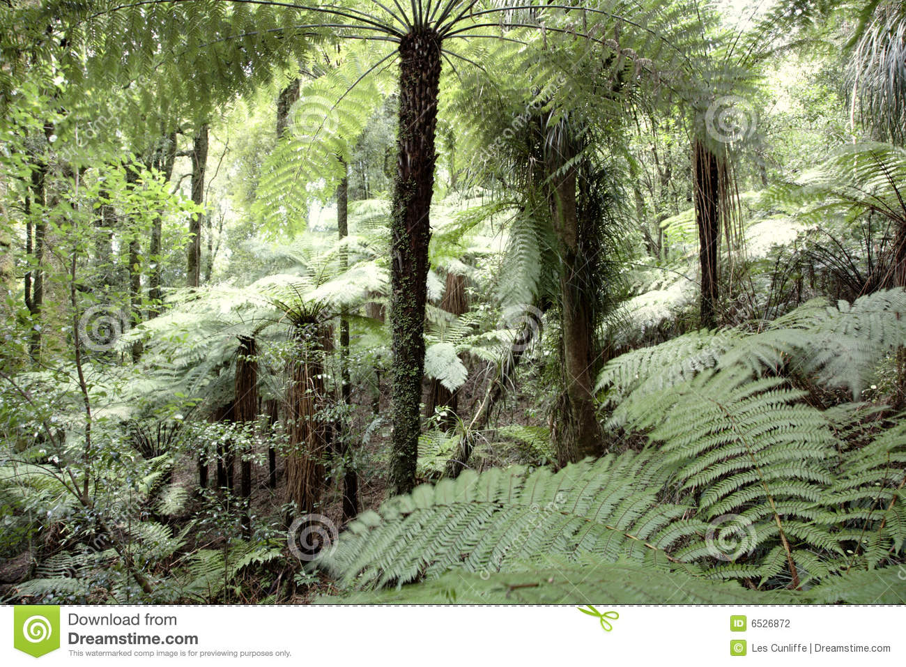 vegetation in the tropical rainforest The tropical rainforest is a kind biome typical of equatorial zones and tropical  areas, with  the vegetation consists of a dense forest with trees over 30 meters.