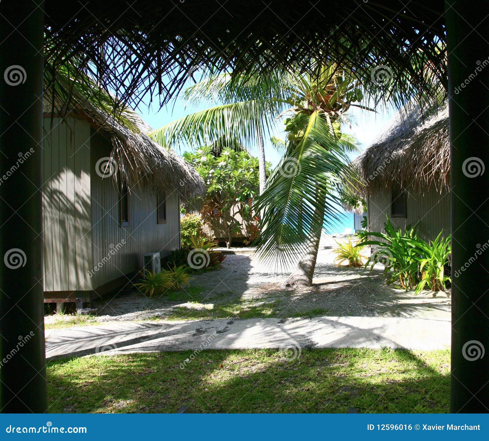 Tropical Garden Royalty Free Stock Image Image 12596016