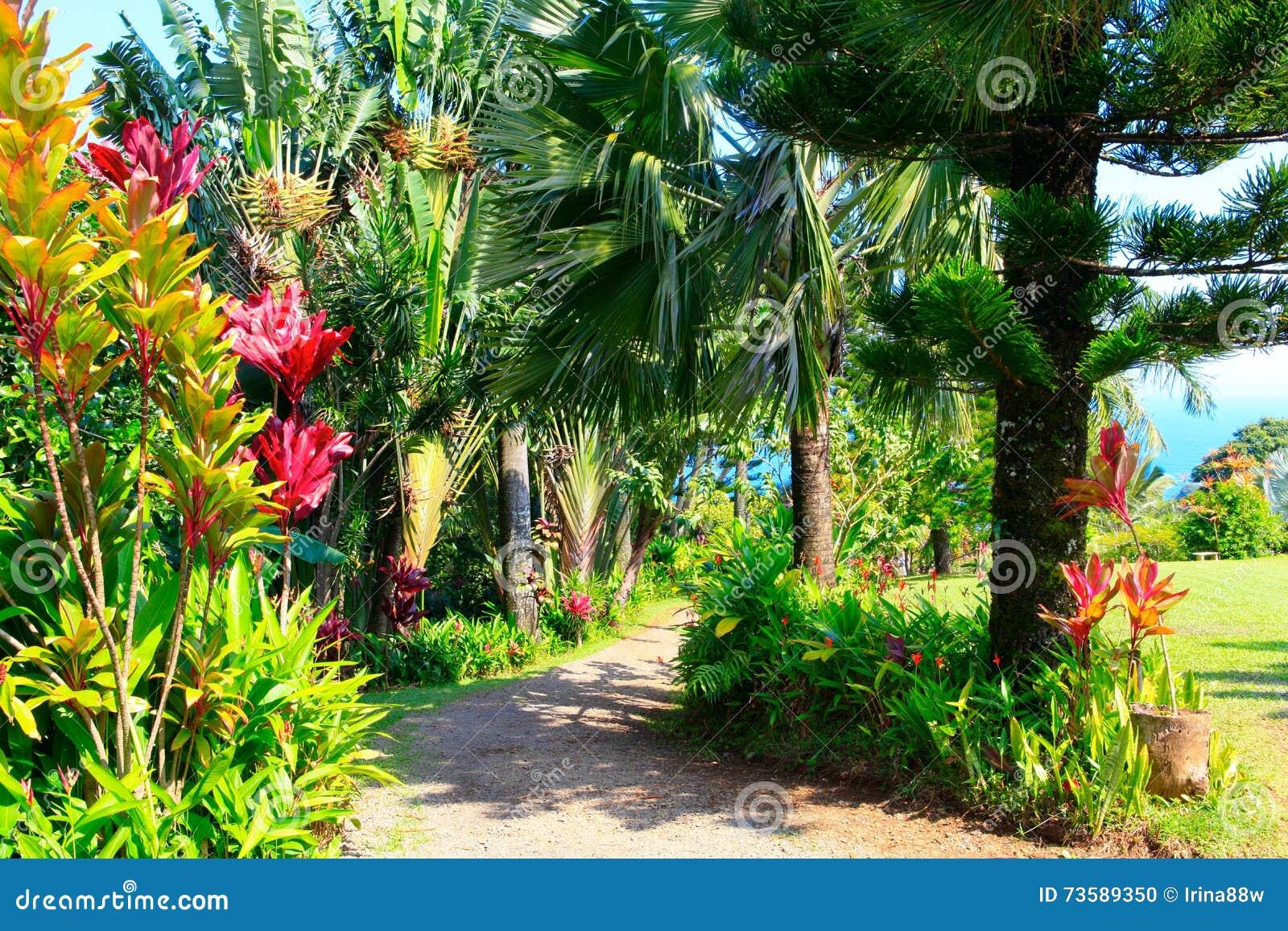 a tropical garden garden of eden maui hawaii stock photo image