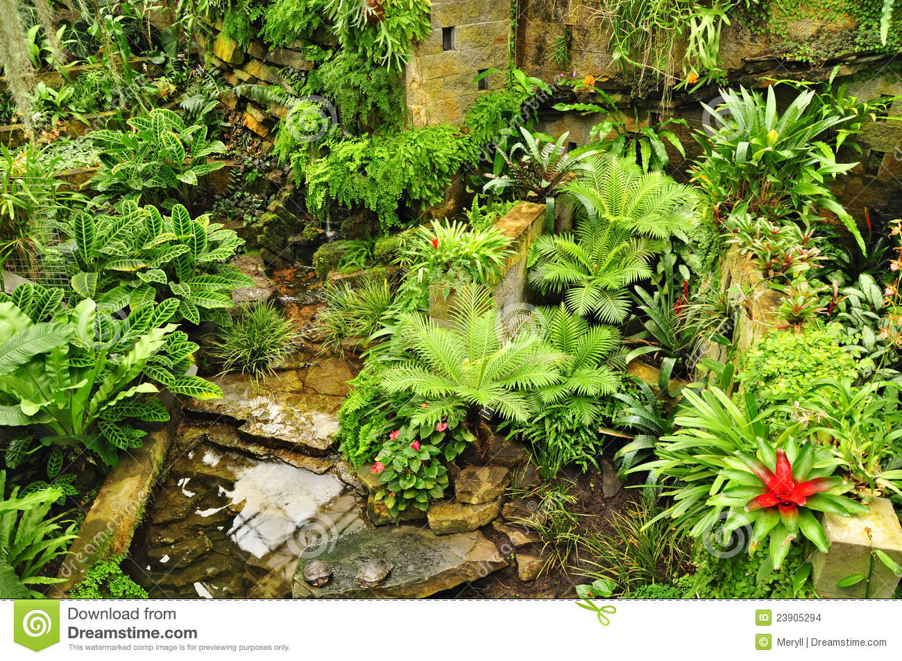 Tropical Garden Green Plants Stock Images - Image: 23905294