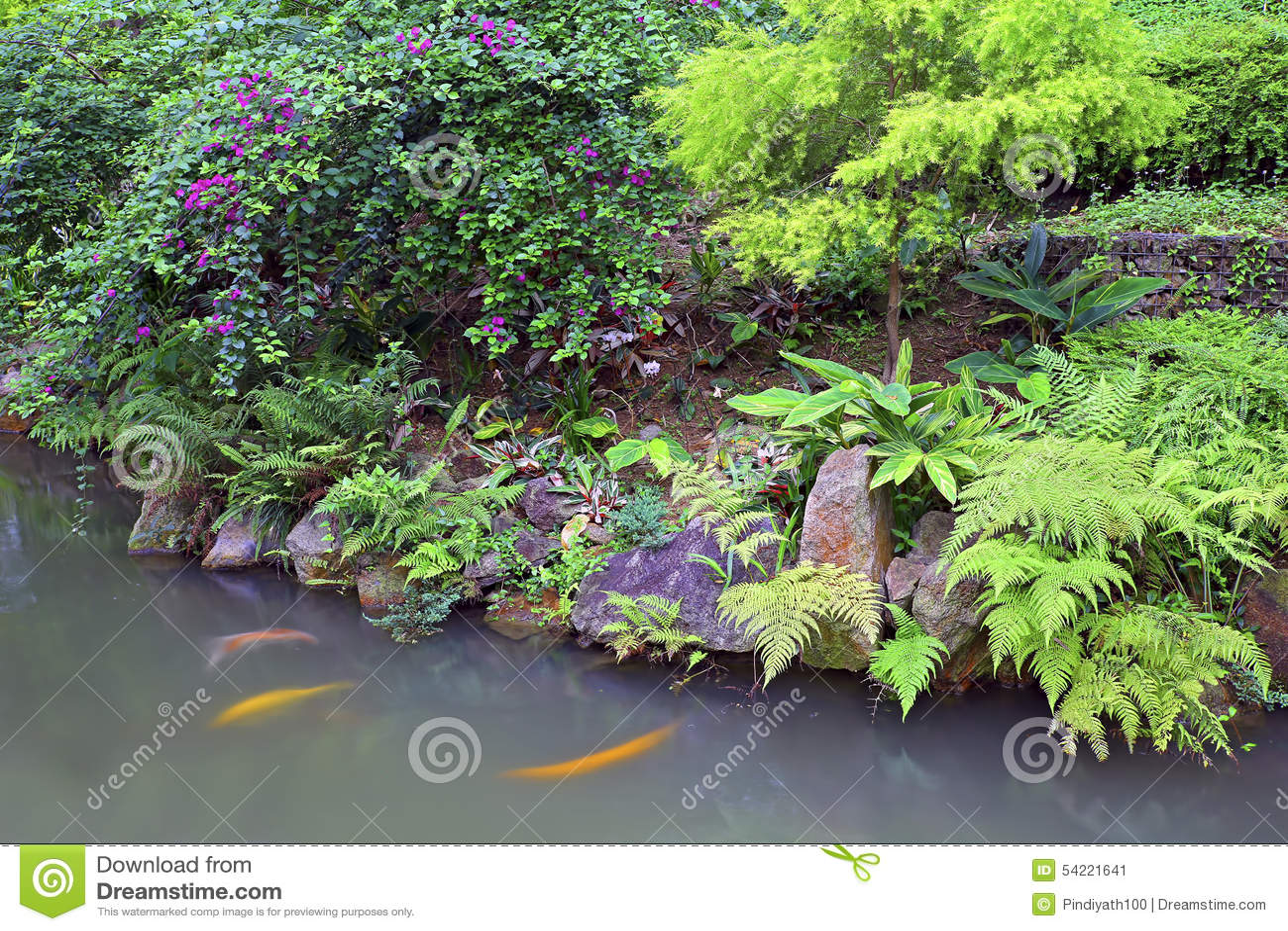Tropical Garden With Koi Fish Pond Stock Photo Image 54221641