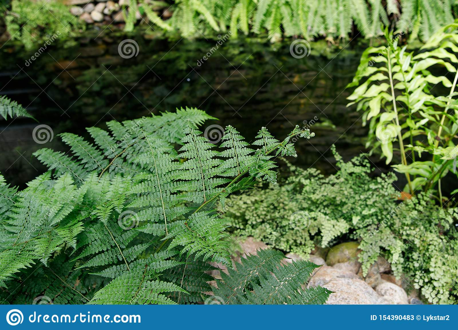 Tropical garden landscape. Fern leaves on the background of water