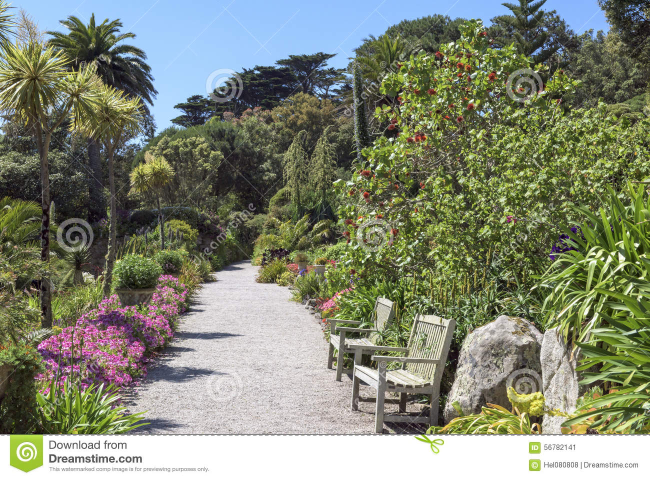 Tropical Garden, Scilly Isles Stock Photo - Image: 56782141