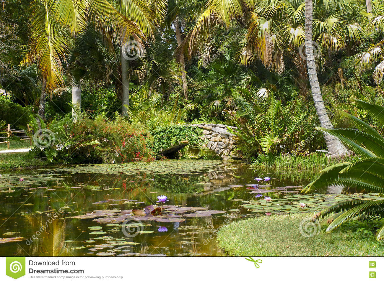 Tropical Garden stock photo. Image of vero, bridge, surrounded ...