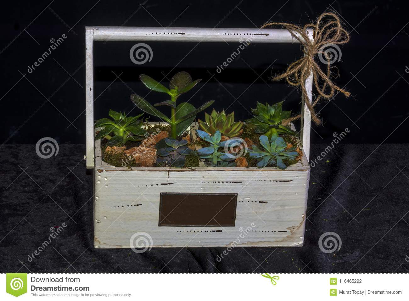 Tropical Gardens Created In Terrarium Glass Containers Stock Photo