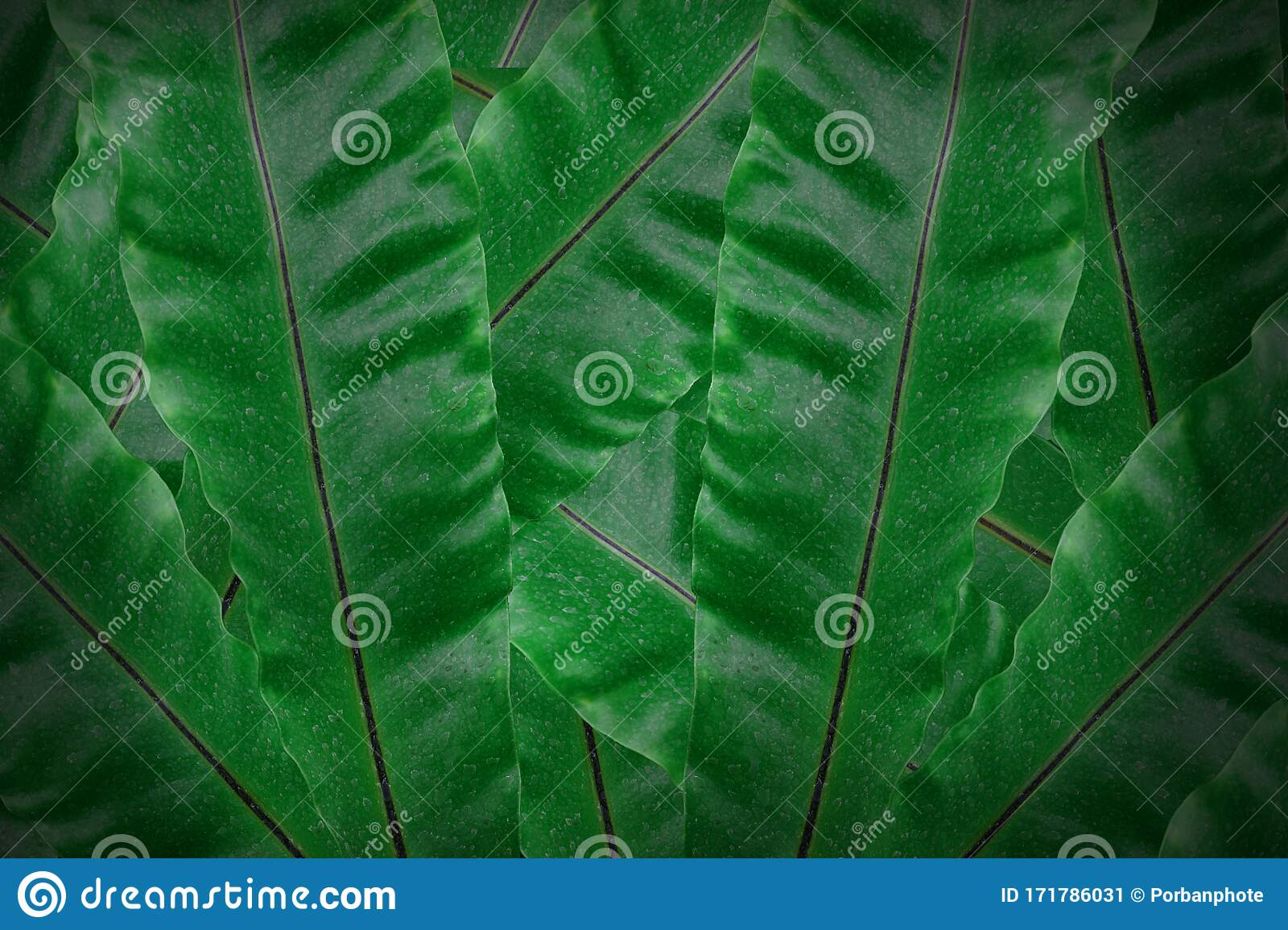 Tropical Green Leaves Background Dark Green Leaf Textured Stock
