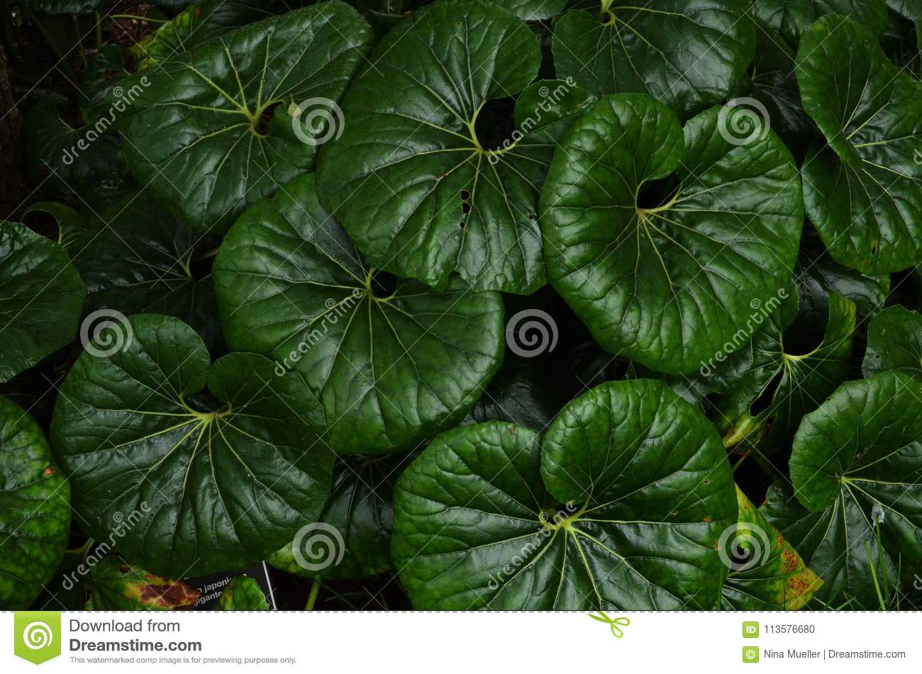 Tropical Green Leaves Wallpaper Stock Photo Image Of Beautiful Background 113576680 Tropical leaves exotic tropic leaf botanic vector. dreamstime com