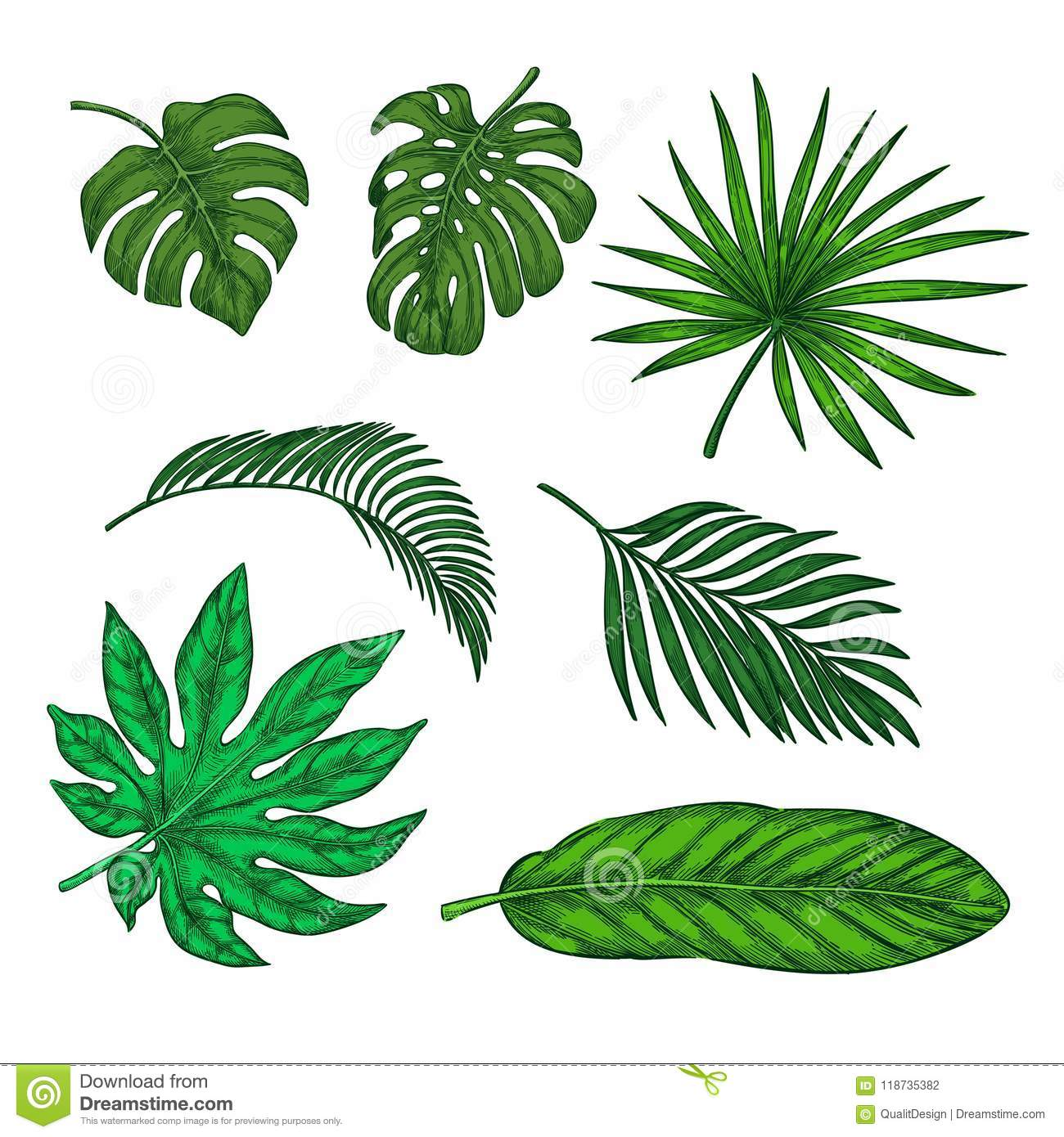 Tropical Green Palm Leaves Set Vector Sketch Illustration Hand Drawn Tropic Nature And Floral Design Elements Stock Vector Illustration Of Sketch Drawing 118735382 Sketch composition with tropical leaves stock vector. https www dreamstime com tropical green palm leaves set vector sketch illustration hand drawn tropic nature floral design elements image118735382
