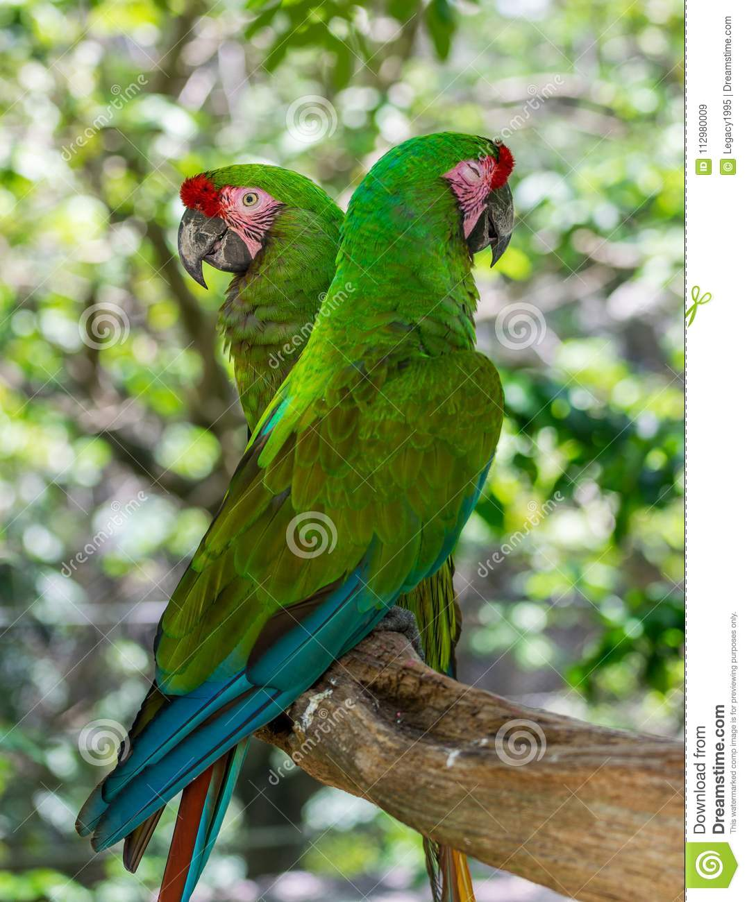 Tropical Green Parrots