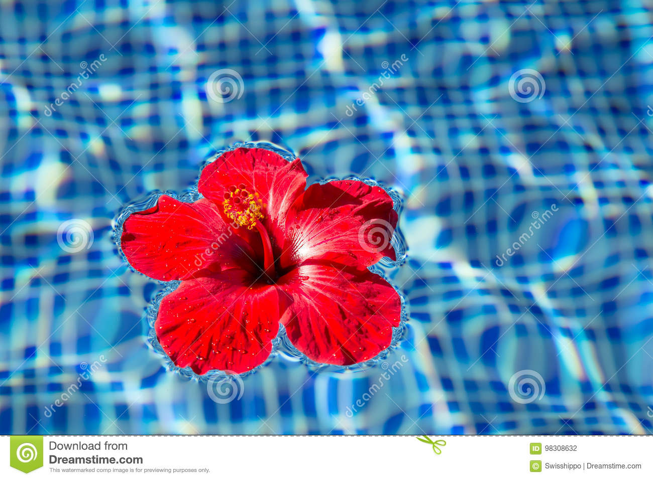 Tropical Hibiscus Flower In Water Stock Photo Image Of Renewable