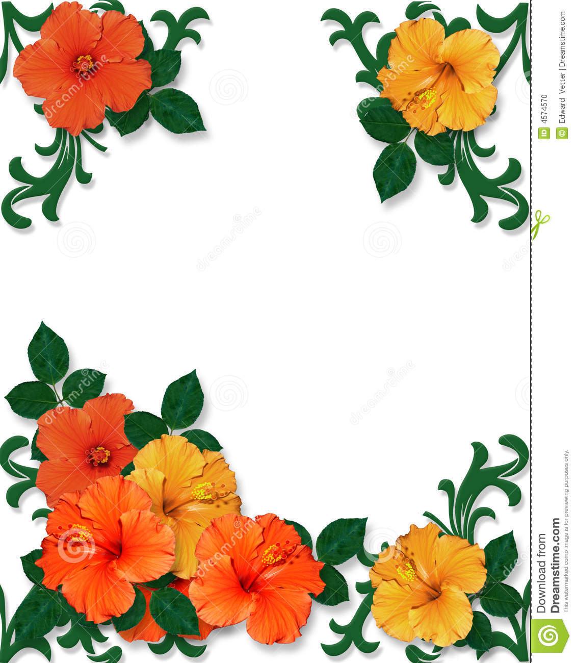 Tropical Hibiscus Flowers Background Stock Photo - Image ...