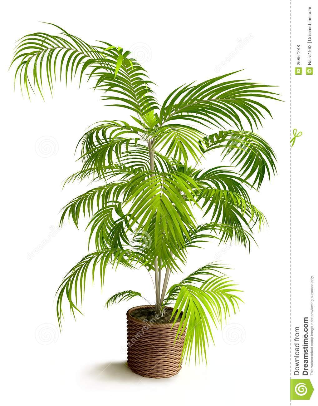 Tropical house plant pictures