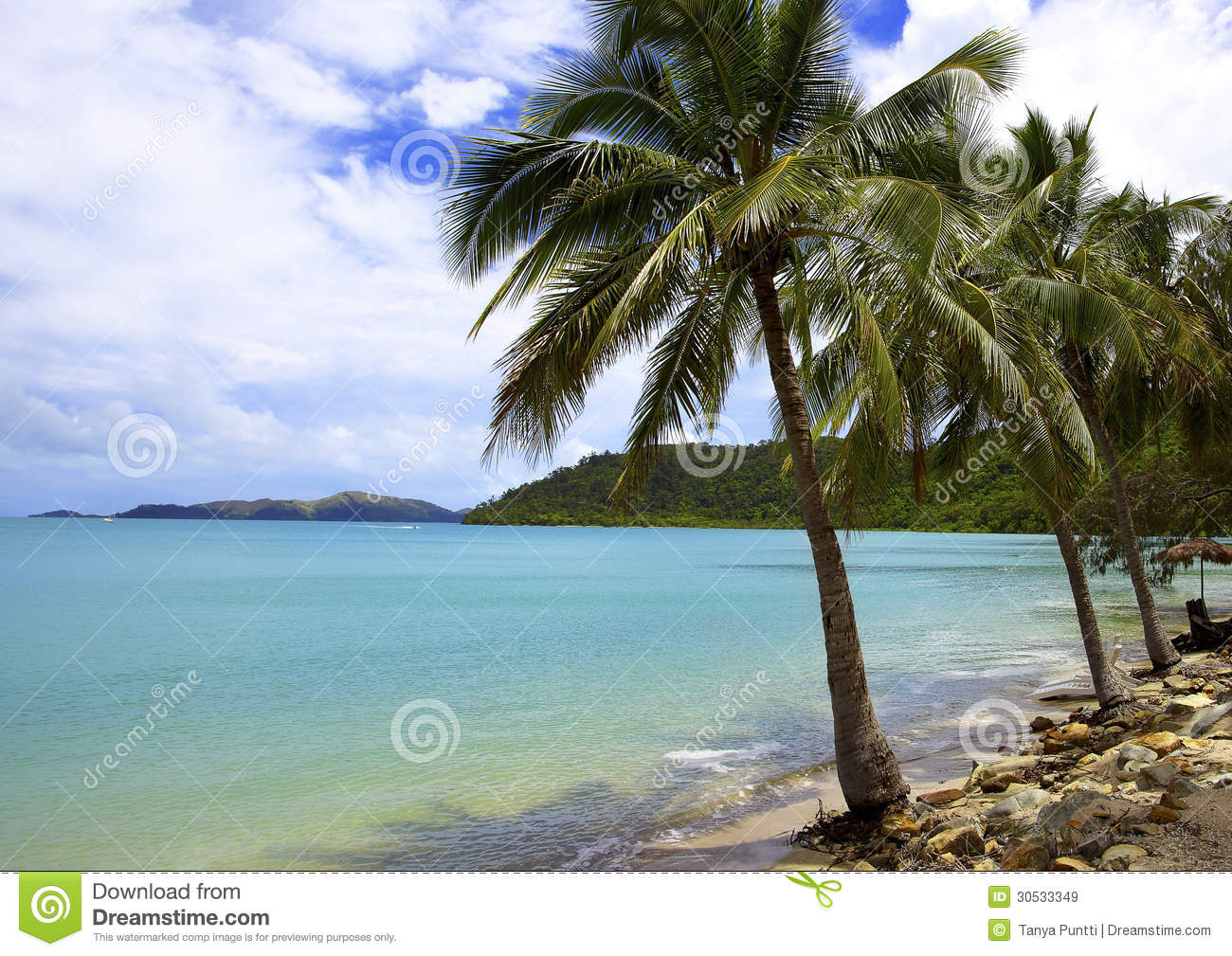 Coconut Island Queensland: Tropical Island With Coconut Trees