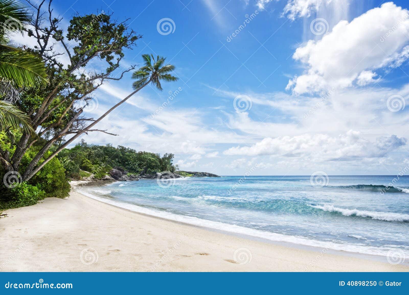 Deserted Tropical Island: Tropical Island Stock Photo