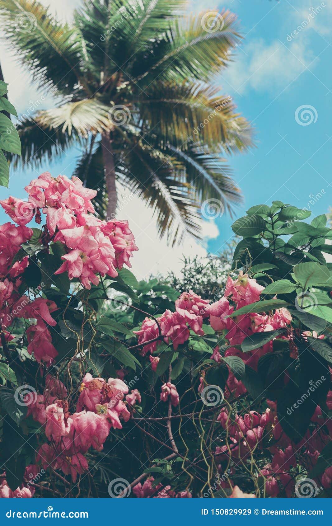 Tropical island flowers, palms, and blue sky