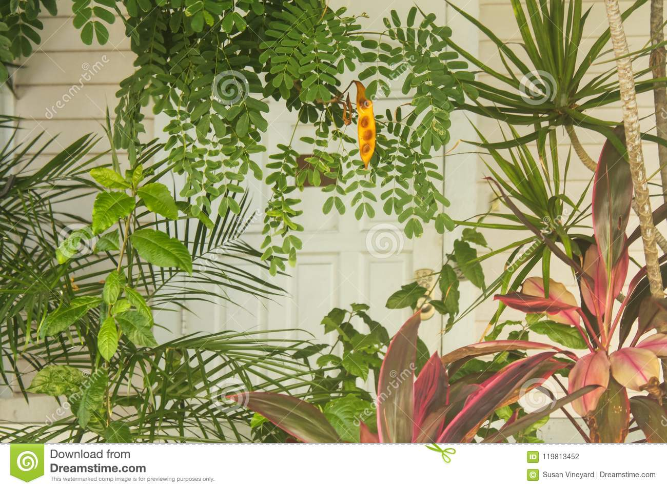 Tropical Island Key West background with colorful but muted plants in front of a blurred section of a white wooden house and door