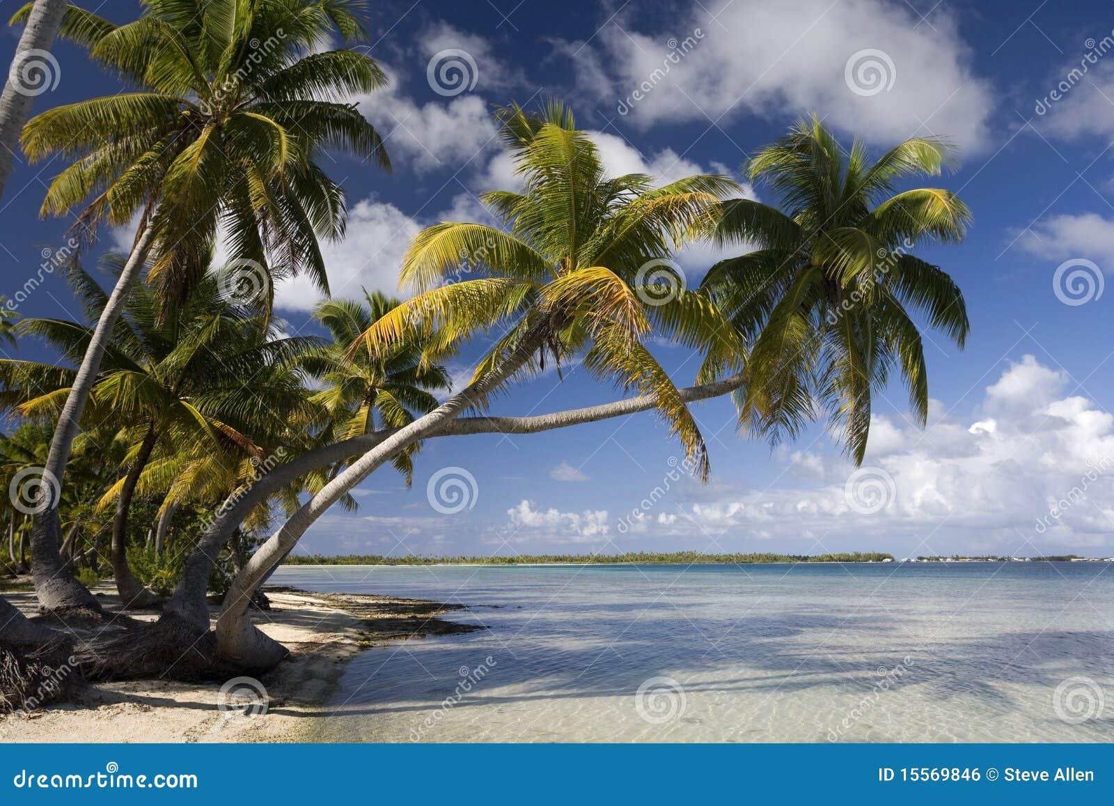 Tropical Island Paradise: Cook Islands Stock Photo