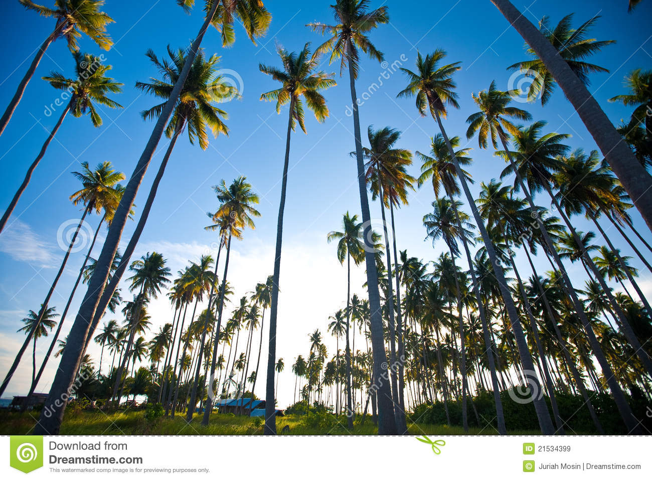 Tropical Island Sun: Tropical Island In The Sun Royalty Free Stock Images