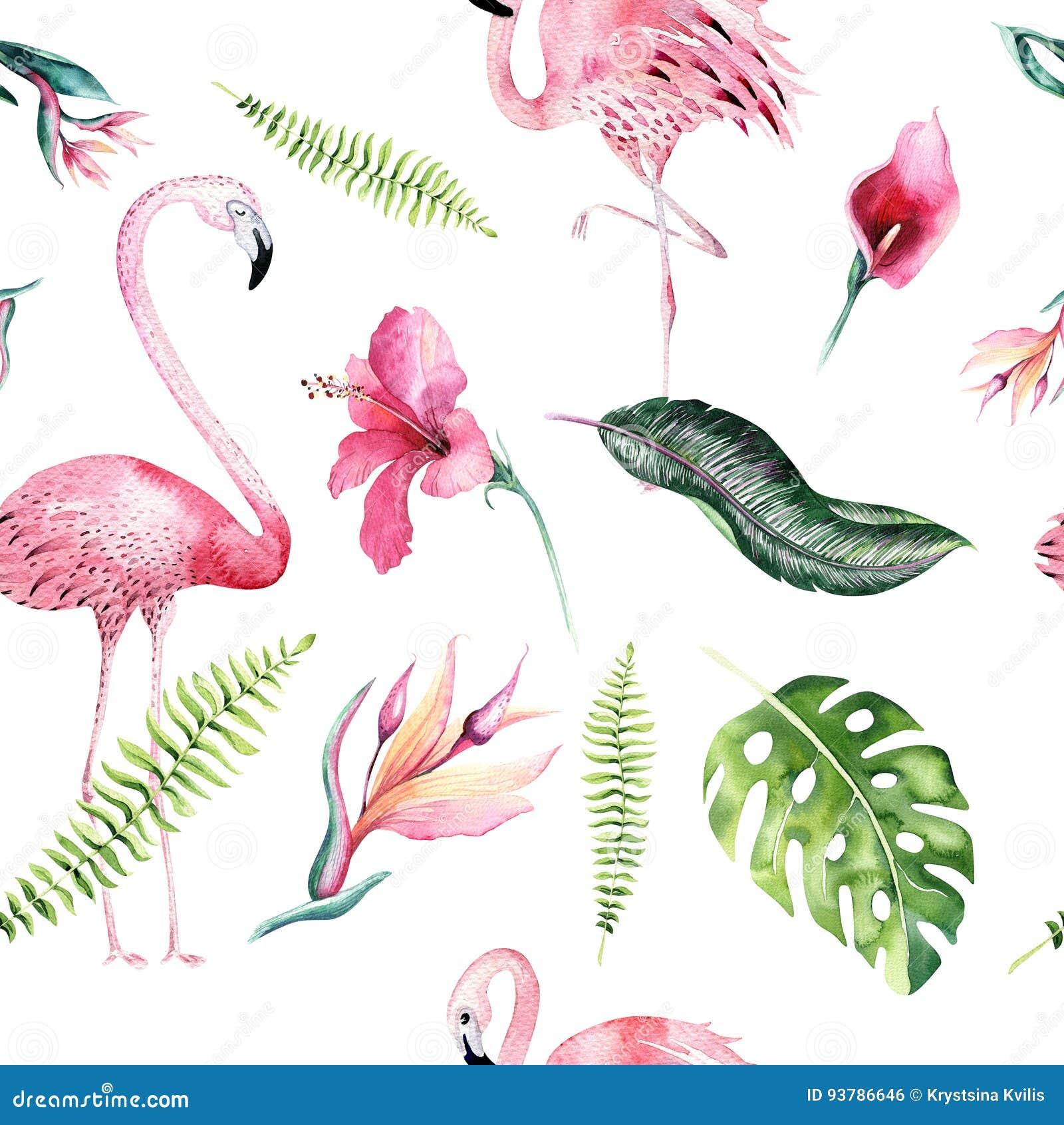 Flamingo Drawing Tutorial Cartoon Vector Cartoondealer