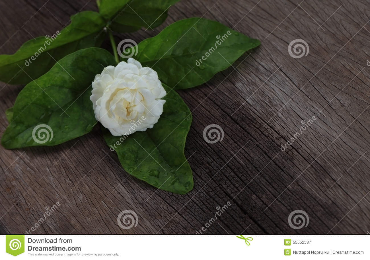 Tropical jasmine flower on wood.Jasmine flowers and leaves on br