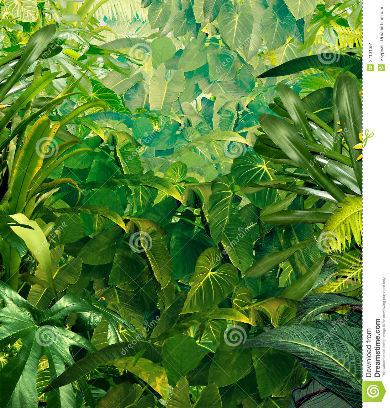 tropical jungle background stock image image 37131351
