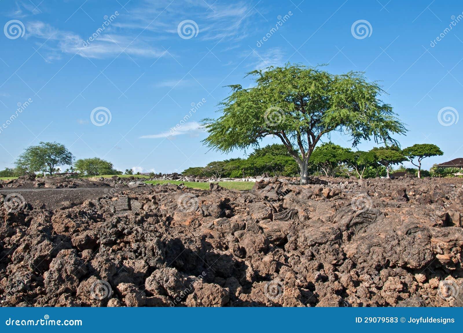 Landscaping Boulders Houston : Design ideas landscaping lava rocks in houston