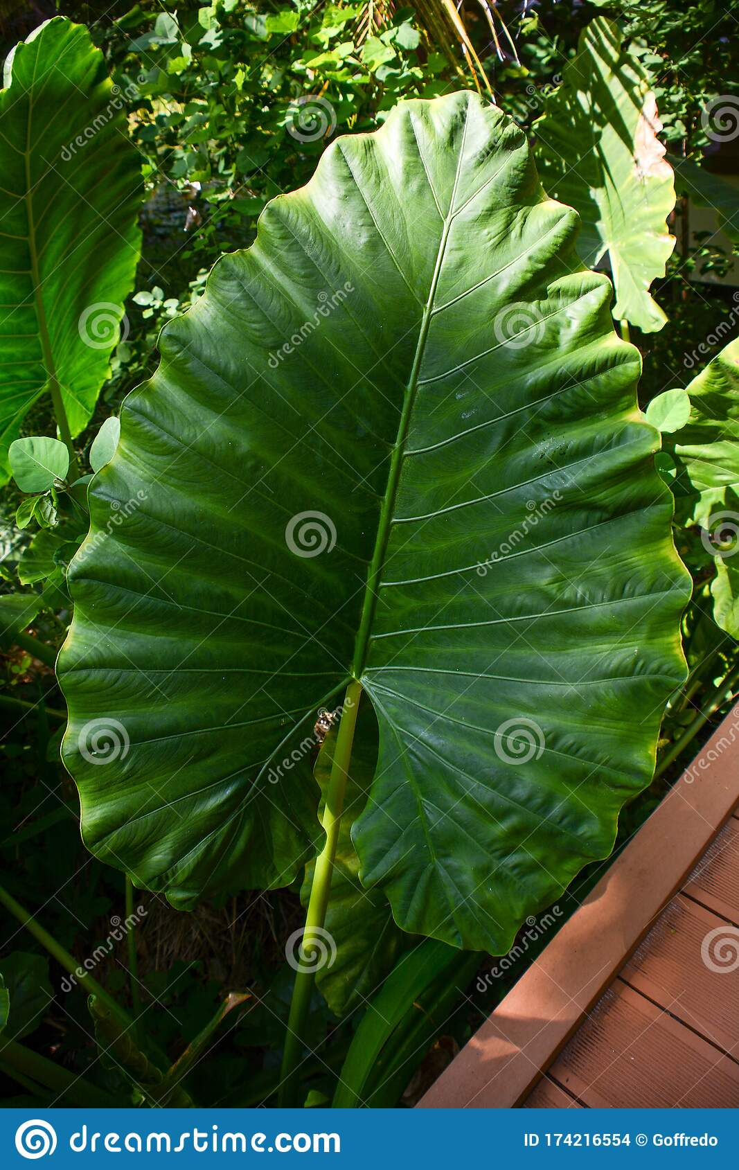 Tropical Leaf Stock Photo Image Of Natural Biology 174216554 Types include foliage, flowering, succulents and cacti. dreamstime com