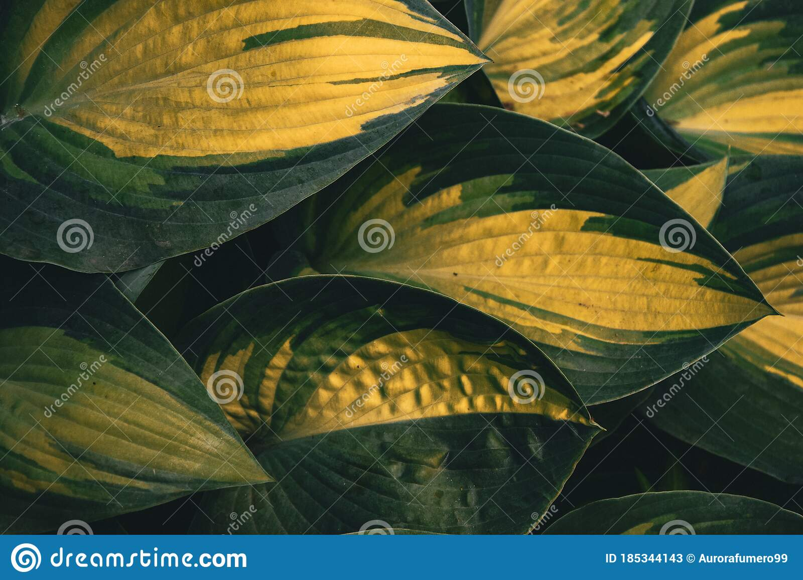 Tropical Leaves Big Tropical Leaves Background Wallaper Stock Image Image Of Facebook Leaves 185344143 Search, discover and share your favorite tropical leaves gifs. dreamstime com