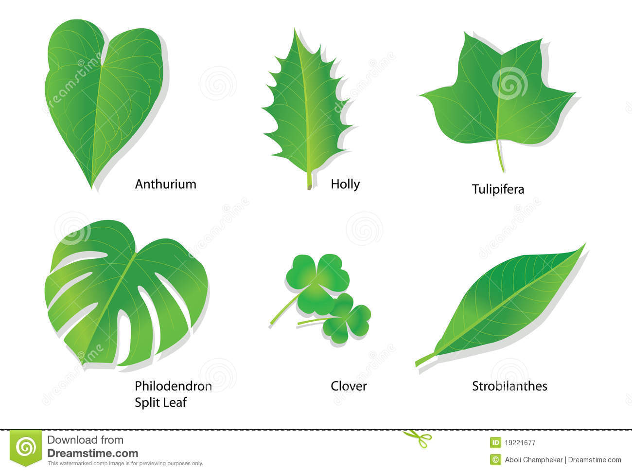 Tropical Leaves With Botanical Names Stock Vector Illustration Of Environmental Acanthaceae 19221677 Alibaba.com offers 827 tropical trees names products. dreamstime com
