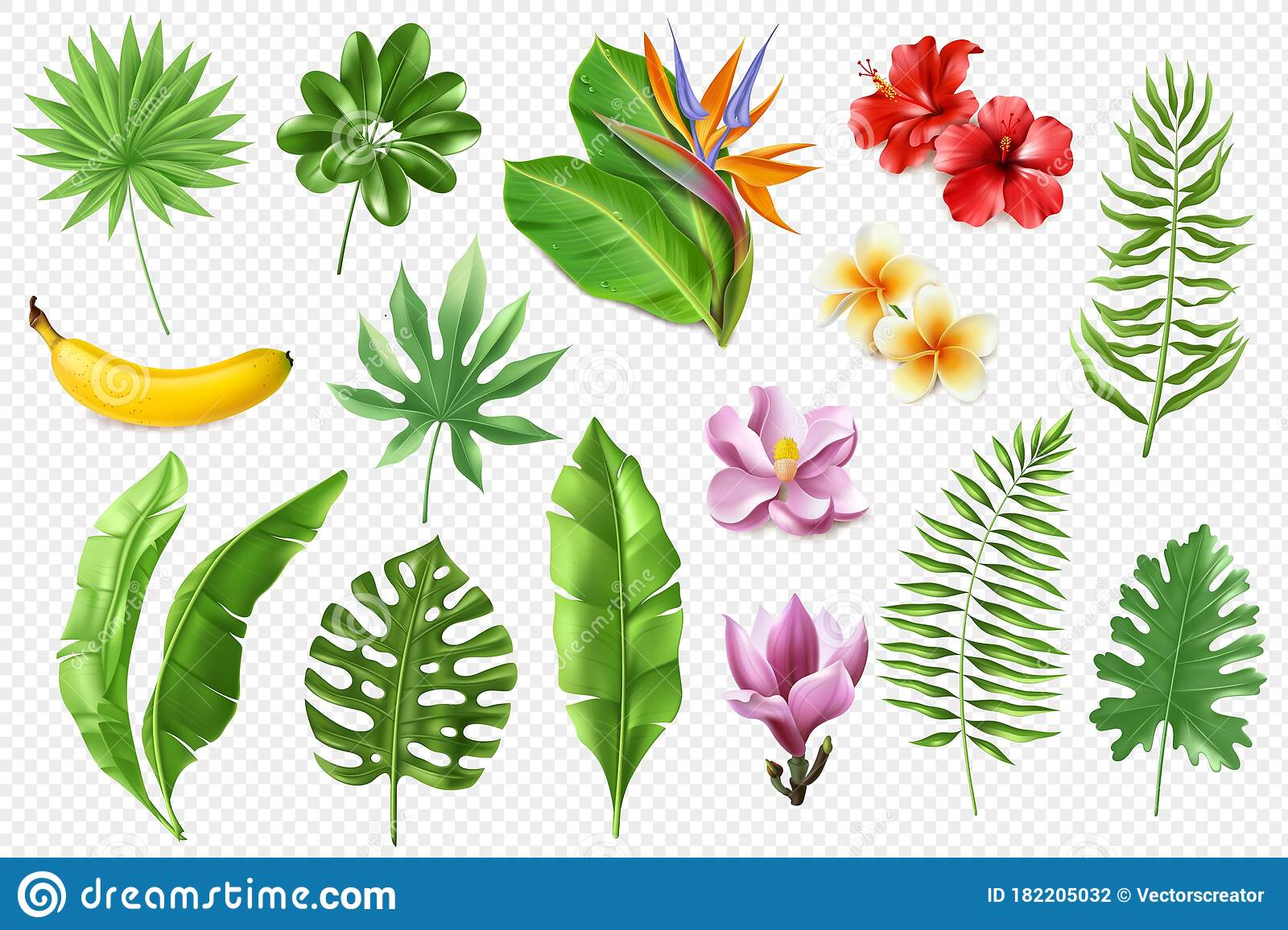 Tropical Leaves Collection A Large Set Of Realistic Tropical Leaves And Flowers On A Transparent Background Vector Stock Vector Illustration Of Botanic Nature 182205032 Green leaves illustration, leaf tropics, banana leaf background, leaf, maple leaf, computer wallpaper png. dreamstime com