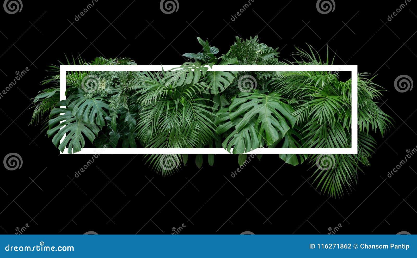 Tropical leaves foliage jungle plant bush nature backdrop with w