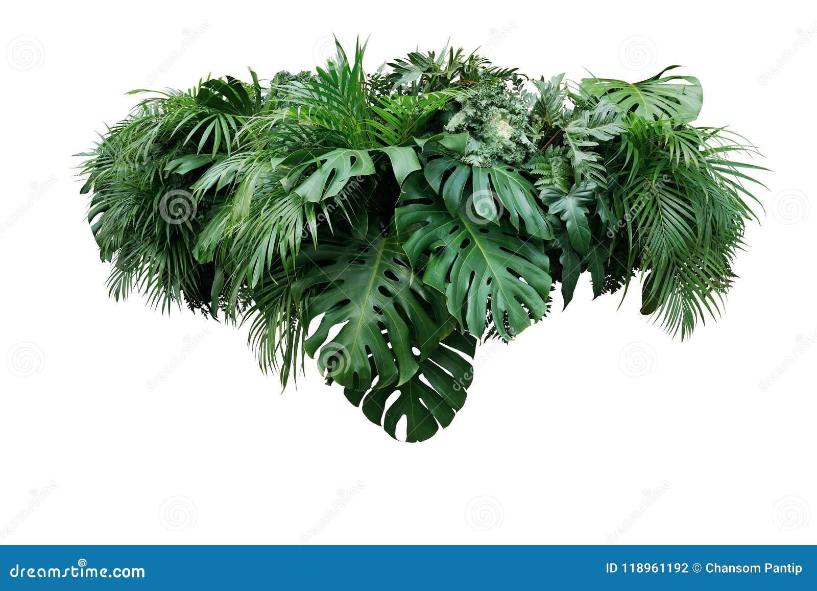 Tropical leaves foliage plant jungle bush floral arrangement nat