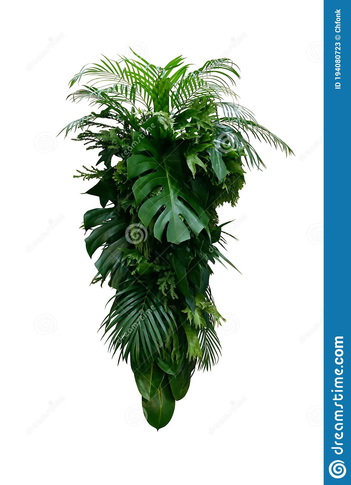 Tropical Leaves Foliage Plants Bush Monstera Palm Rubber Plant Pine Fern And Philodendron Leaves Floral Arrangement Indoors Stock Image Image Of Leaf Border 194080723 They ship well and last a very long time in your arrangements. dreamstime com