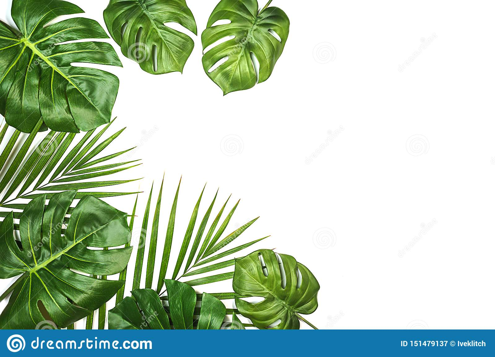 Tropical Leaves Monstera And Palm Isolated Swiss Cheese Plant Isolated On White Background Stock Image Image Of Green Monstera 151479137 .buy quality home & garden directly from china suppliers:one piece monstera artificial plants artifici flower 12 inch bjd doll big leaf black pine tree accessory home jewelery box for necklace aztec. https www dreamstime com tropical leaves monstera palm isolated swiss cheese plant white background flat lay top view image151479137