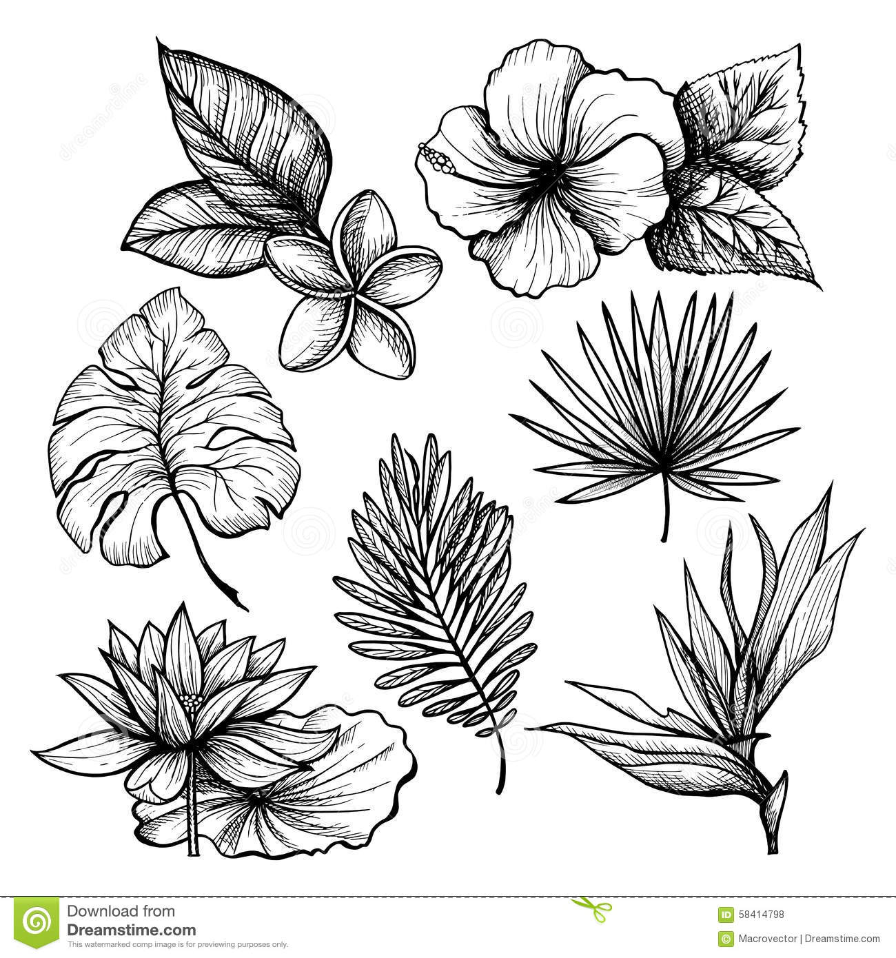 Hawaiian Flower Line Drawing : Tropical leaves set stock vector illustration of elements