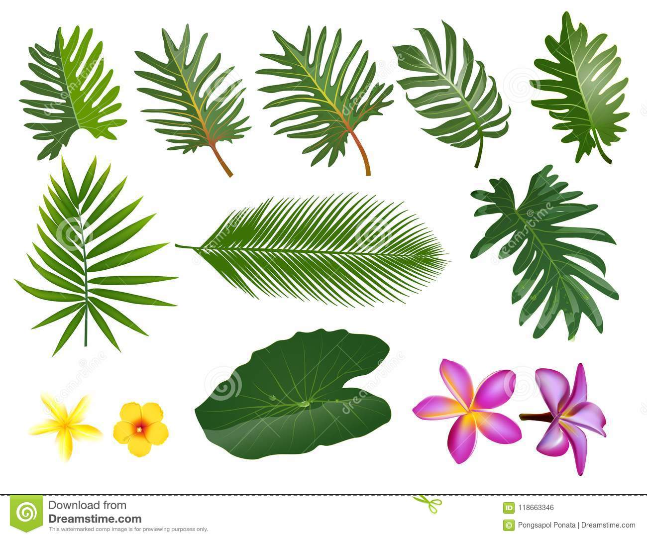 Tropical Leaves Set Vector Clip Art Illustration With Simple Gr Stock Illustration Illustration Of Leaf Beautiful 118663346 Tropical leaf palm print, showing various tropical plants together in one poster. https www dreamstime com tropical leaves vector clip art illustration simple gradients each separate layer tropical leaves set vector clip art image118663346