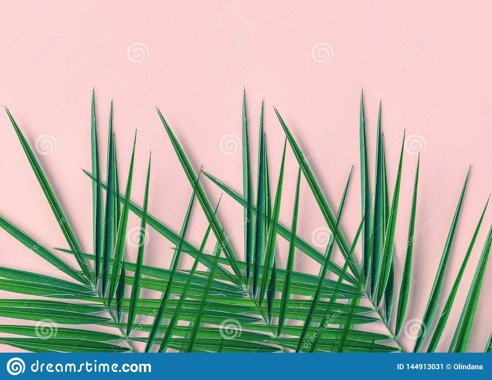 Tropical Nature Background. Spiky Feathery Green Palm Leaves ... on house plant with peach blooms, house plant with jagged leaves, house plant with curly leaves, plant with spikes on leaves, indoor plants with long leaves, house plant identification leaves, house plant with brown leaves, house plant with green and yellow variegated leaves, house plant with bumpy leaves, house plant with waxy flowers, house plant with striped leaves, house plant with heart shaped leaves, house plant spiky green yellow, house with pink and green plant leaves, house plants with colorful leaves, house plant with fuzzy leaves, house plant with pointed leaves, house plant with big leaves, indoor plants with colorful leaves,